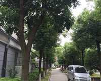 南姚小区小区图片